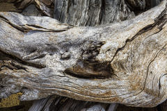 Fine, detailed scrollwork on driftwood at Flagstaff Lake, northw Stock Image