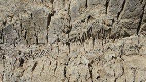 Fine dettagliata su della corteccia della palma fotografie stock