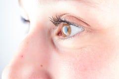 Fine dettagliata su di un occhio marrone nell'alta definizione Immagini Stock