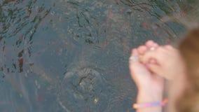 Fine di alimentazione del pesce su archivi video
