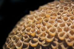 Fine morbida del corallo della tazza su Fotografia Stock Libera da Diritti