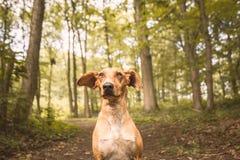 Fine di Dogportrait Fotografia Stock Libera da Diritti