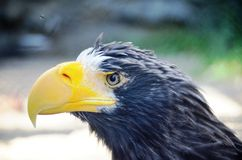 Fine di Eagle immagini stock libere da diritti