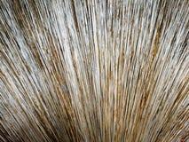 Fine di foglia di palma della scopa su Fotografia Stock