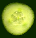 Fine di immagine del cetriolo in su Immagine Stock Libera da Diritti