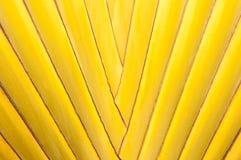 Fine di struttura della palma in su Immagine Stock