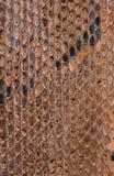 Fine di struttura della superficie della pelle di serpente su per fondo Fotografia Stock