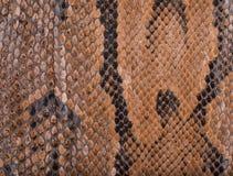 Fine di struttura della superficie della pelle di serpente su per fondo Immagini Stock Libere da Diritti