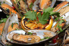 Fine dining meal, new zealand mussels Royalty Free Stock Photos