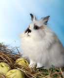 Fine doe rabbit Royalty Free Stock Photos