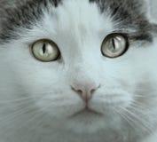 Fine favorita del gatto sul ritratto fotografia stock libera da diritti