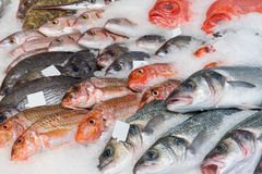Fine fish on ice for sale. At a market Stock Images