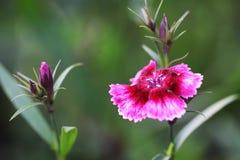 Fine flower Stock Photo