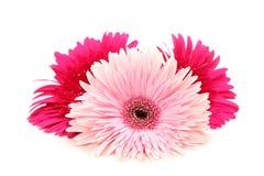 Fine flower Stock Images
