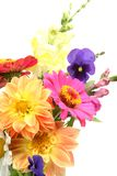 Fine flowers Stock Photography