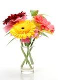 Fine flowers Stock Image