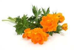 Fine flowers Stock Photos