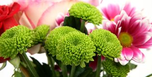 Fine flowers Royalty Free Stock Photography