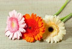 Fine flowers gerbera Stock Image