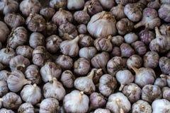 Fine fresca dell'aglio in su Struttura e modello dell'aglio Immagini Stock