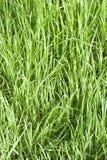 Fine fresca della priorità bassa dell'erba in su immagine stock libera da diritti