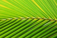 Fine fresca di struttura della foglia della banana su Fotografia Stock Libera da Diritti
