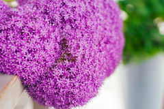 Fine fresh abstract lilac flowers close-up, texture. Beautiful natural floral background, always fashionable modern color. Concept Stock Images