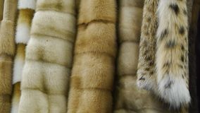 Fur coat in the store. Fine fur clothing on hangers in a store. Fur coat in the store