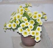 Fine gialla del fiore della petunia su Immagini Stock Libere da Diritti