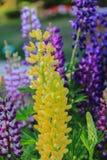 Fine gialla del fiore in su Immagine Stock Libera da Diritti