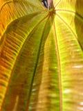 Fine gialla della foglia su fotografia stock libera da diritti