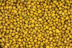 Fine grain mustard the background Royalty Free Stock Images