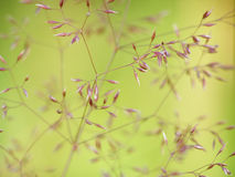 Fine grass Stock Photography