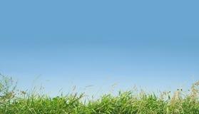 Fine green grass Stock Image
