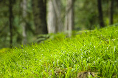 Fine green grass Royalty Free Stock Images