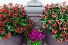 Fine grigia dei fiori rosa-rosso della lettera del contenitore di posta sui tulipani del vaso porpora fotografie stock