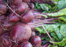 Fine grown beet Stock Photo