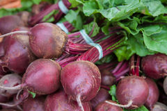 Fine grown beet Royalty Free Stock Photos