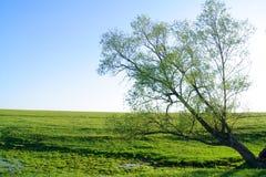 Fine landscape Stock Image