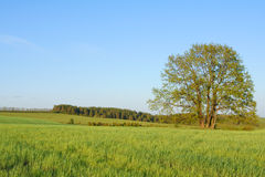 Fine landscape Stock Images
