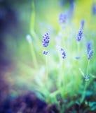 Fine lavender bush on blurred nature background Stock Photos