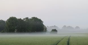 Fine light fog and cornfield Stock Photos