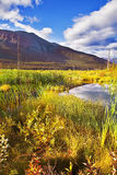 Fine Mellow autumn. In reserve of Northern Canada Royalty Free Stock Image