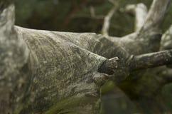Fine morta dell'albero su Fotografie Stock