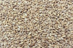 Fine naturale dell'alimento biologico del grano su fondo immagine stock