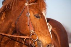 Fine occidentale del cavallo su Immagini Stock Libere da Diritti