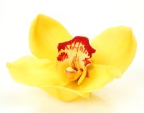 Fine orchid Stock Images