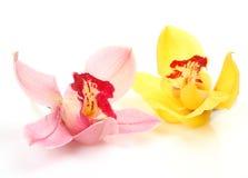 Fine Orchids Stock Photos