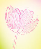 Fine pink abstract flower against. Stock Photography