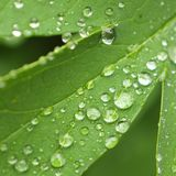Fine rain water droplets on leaf Stock Photos